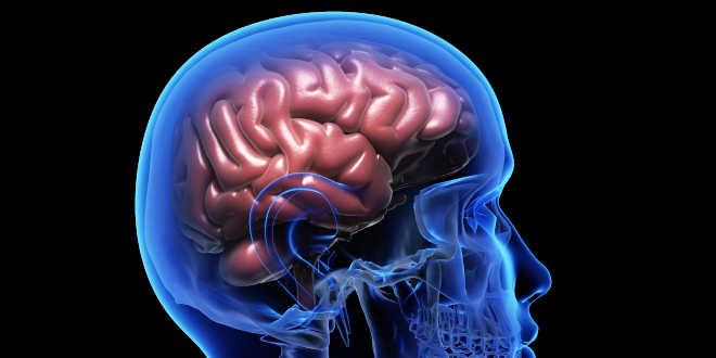 Huperzine A efectos memoria