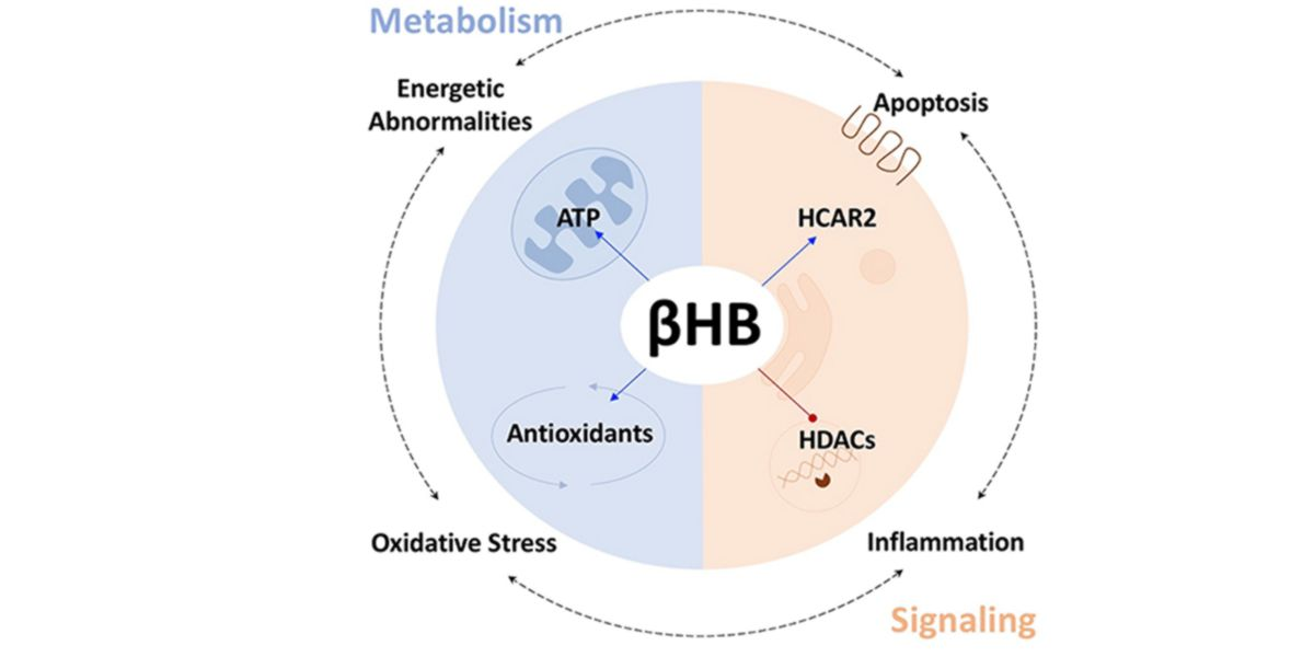 Modulaciones metabólicas