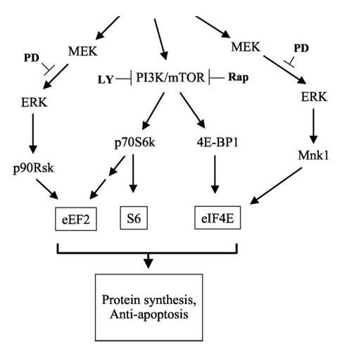 Síntesis proteica