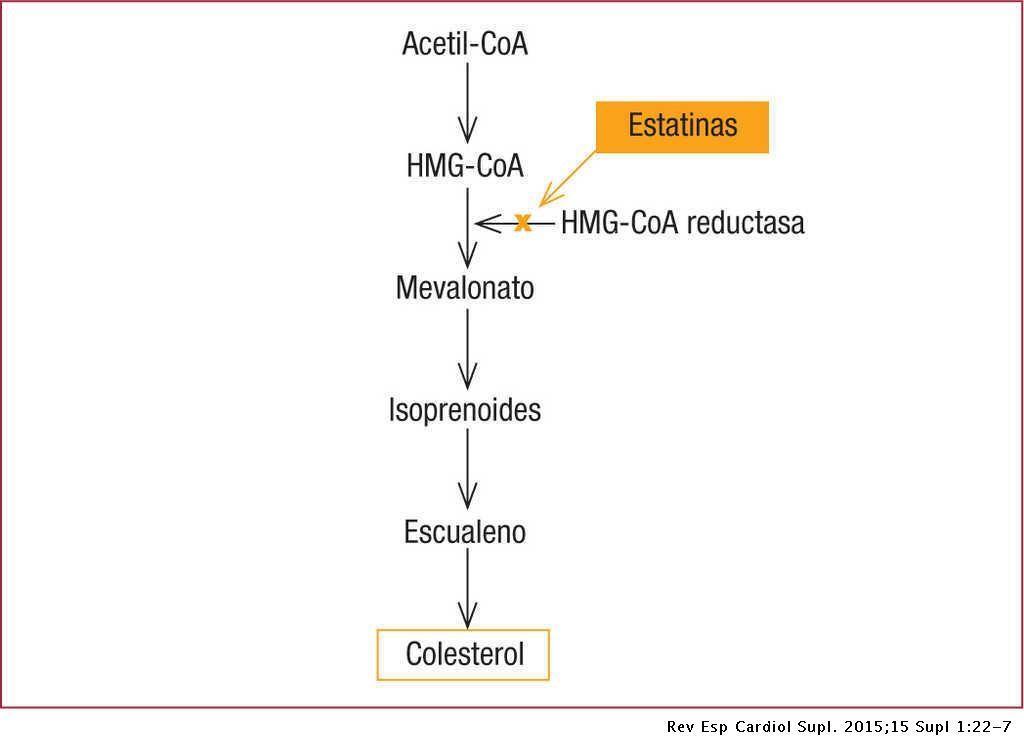 Cómo actúan las estatinas