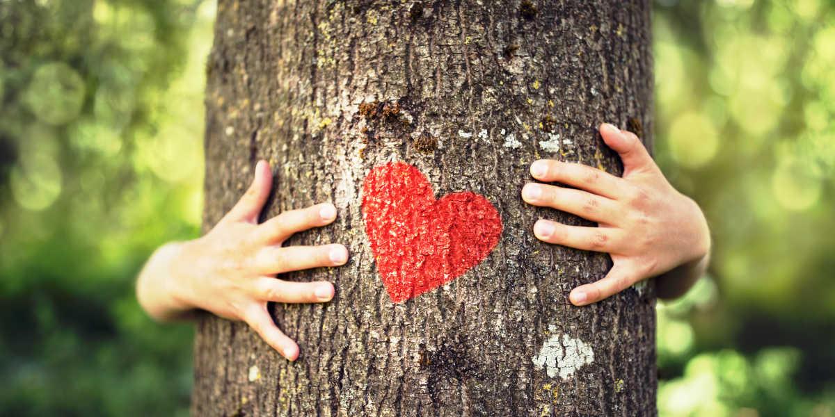 ¿Cómo efectúa una protección al corazón la coenzima Q10?