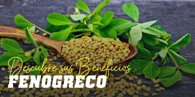 Fenogreco: Propiedades, beneficios y contraindicaciones para la salud