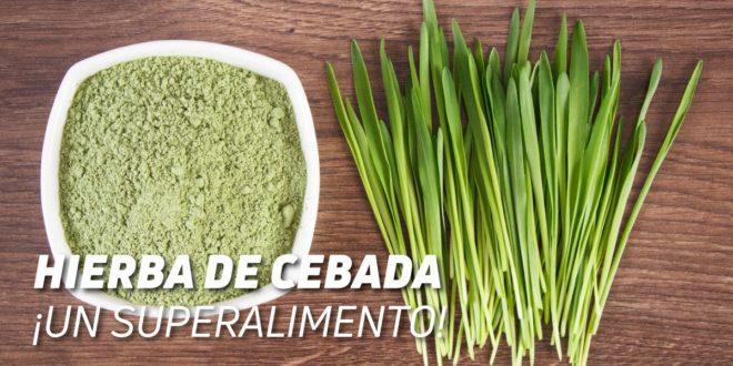 Hierba de Cebada: Beneficios y Propiedades de este Superalimento