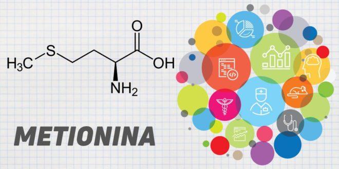Metionina: Todo lo que debes Saber de este Aminoácido