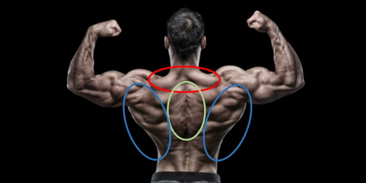 Músculos extrínsecos de la espalda