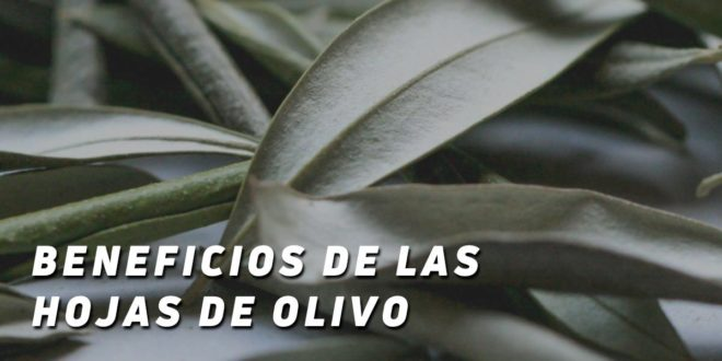 Beneficios de las Hojas de Olivo