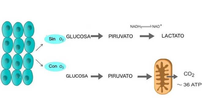 Proceso de glucólisis