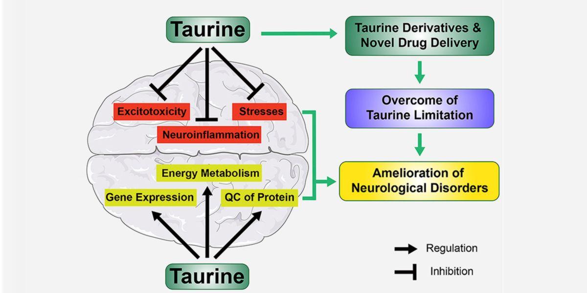 Taurina y Neuroprotección