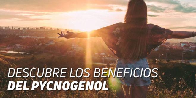Pycnogenol: Descubre sus beneficios para la salud