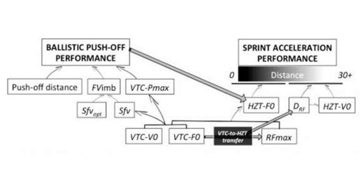 Perfil fuerza-potencia-velocidad