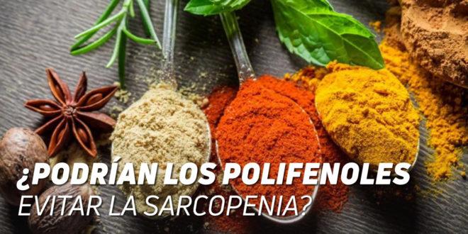 ¿Podrían los Polifenoles Evitar la Sarcopenia?