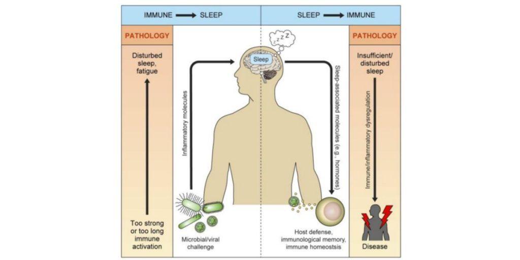 Efectos de la activación del sistema inmune