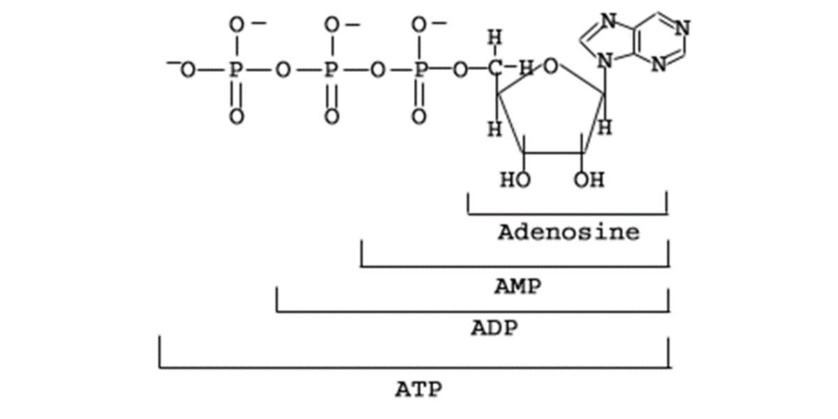 Adenosín