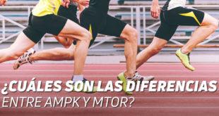 AMPK y MTOR