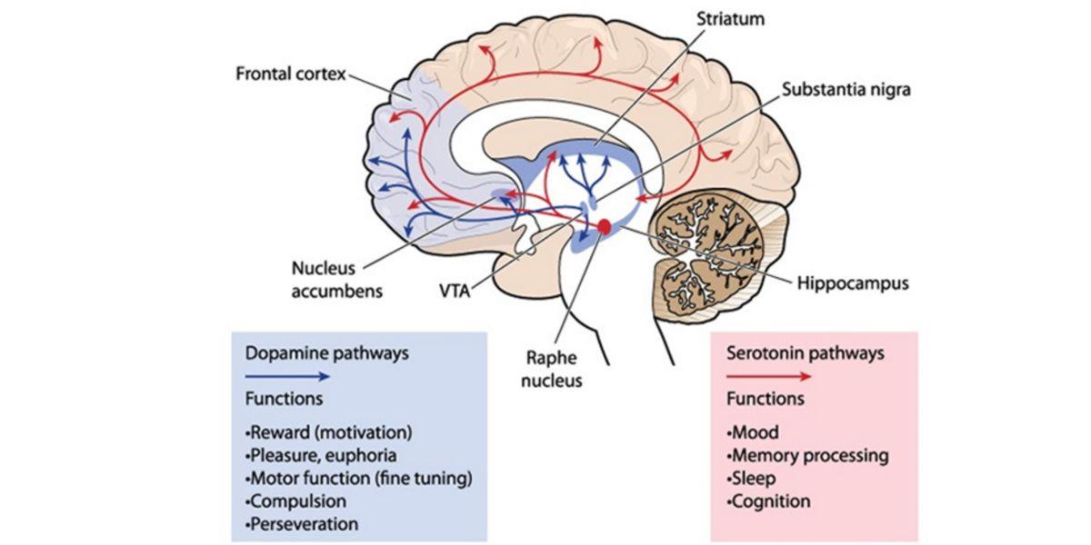 Producción de dopamina