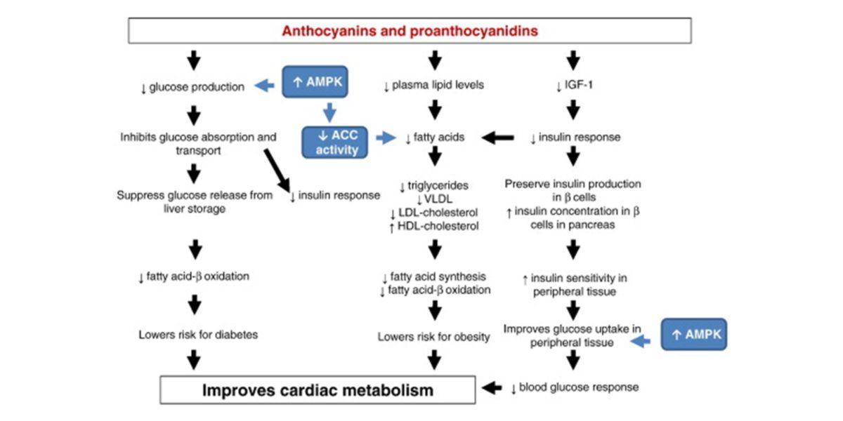 Consumo de proantocianidinas y antocianinas