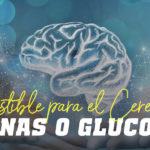 combustible para el cerebro: cetonas vs glucosa