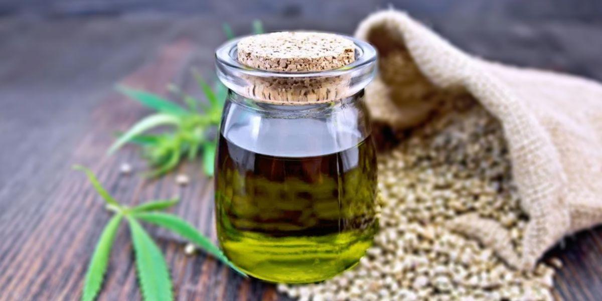 producción aceite de cañamo