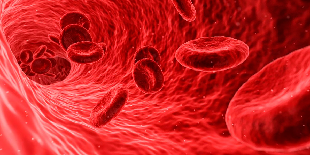 Células de la Sangre