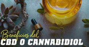 Beneficios del CBD o Cannabidiol