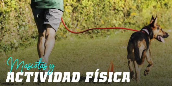 Mascotas y Actividad Física: ¡Una Relación de 10!