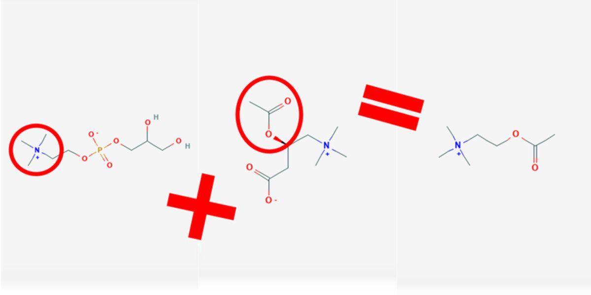 Síntesis acetilcolina