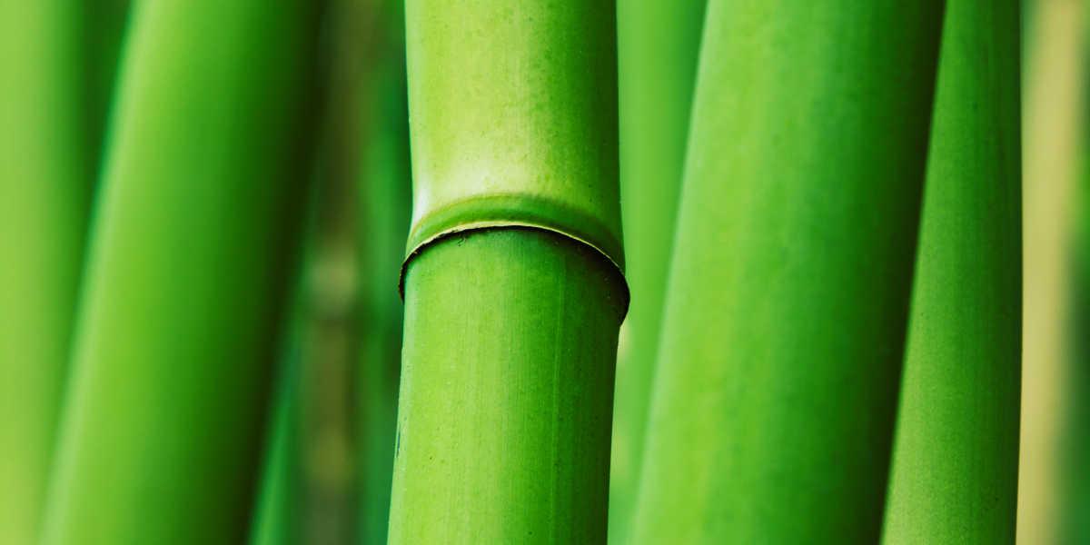 Propiedades del Bambú y Extracto de Bambú
