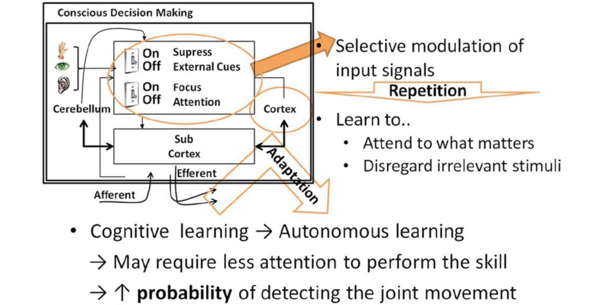 Efectos del entrenamiento sobre la plasticidad nerviosa