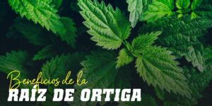 Beneficios de la Raíz de Ortiga