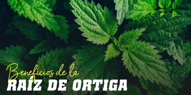Extracto de Raíz de Ortiga: ¿Qué es y porqué incluirlo en tu Plan de Suplementación?