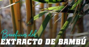 Propiedades del Extracto de Bambú