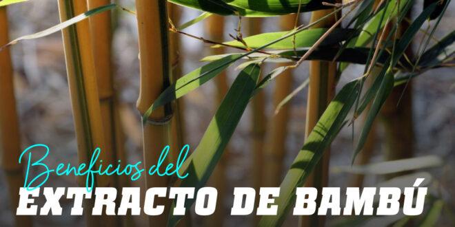 Extracto de Bambú: Propiedades de una planta milenaria