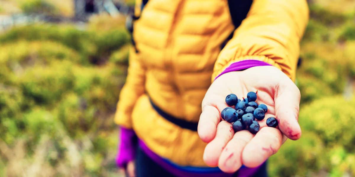 Fruta deportos vitaminas