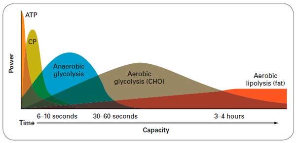 Substratos energéticos