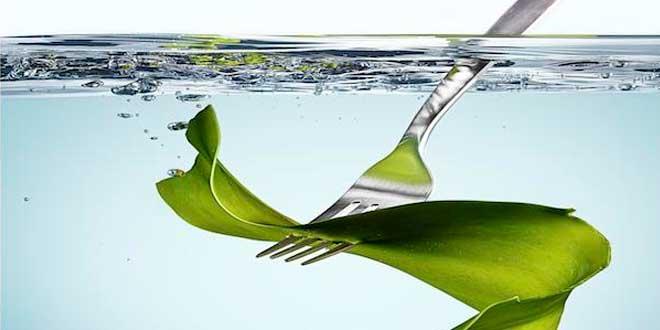 benefícios kelp