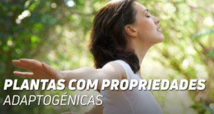 Plantas com propriedades adaptogénicas