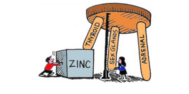 Funções do zinco