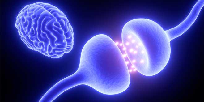 Fosfatidilserina melhora a transmissão de pulsos elétricos neurais