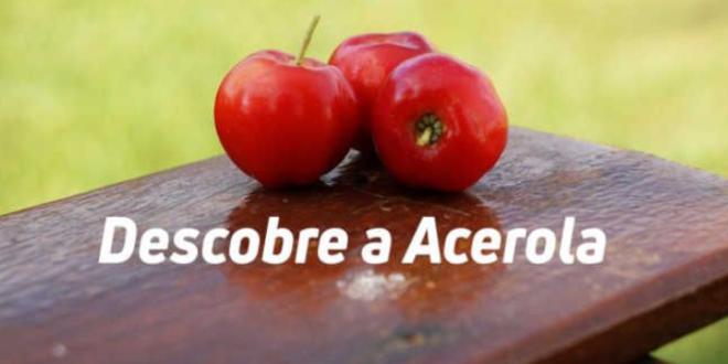 Acerola – Propriedades, Benefícios, Para que serve, Como tomar…