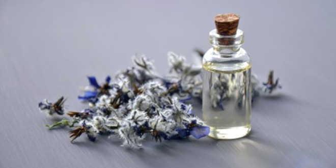 Óleo de Borragem – Aliado para a saúde da pele