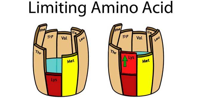aminoacidos veganos