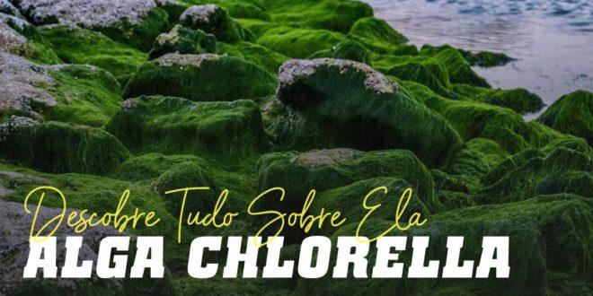 Alga Chlorella – Eficaz para desintoxicar o organismo