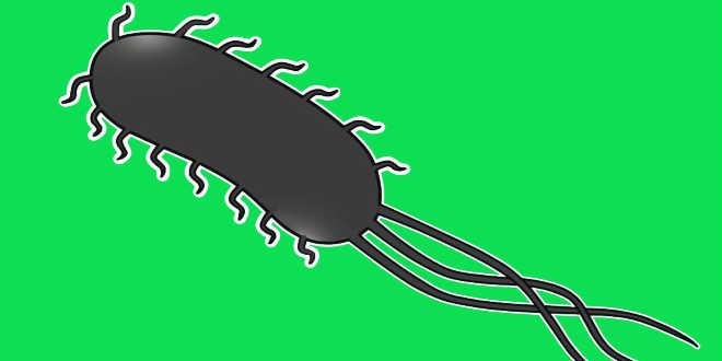 bateria escherichia coli