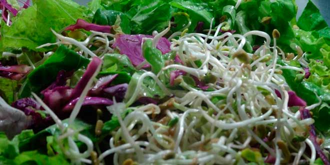 salada feno-grego