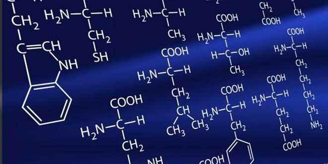 L-Ornitina – O que é, para que serve e benefícios