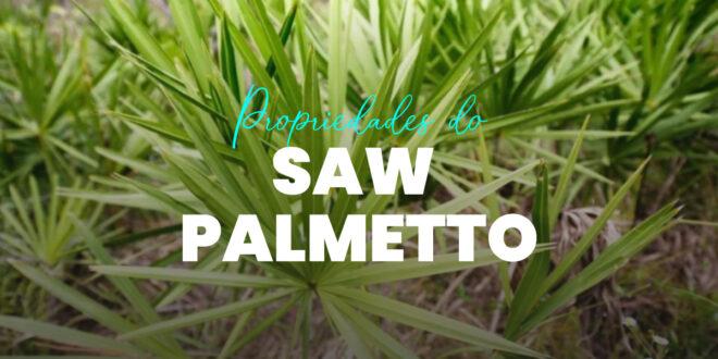 Saw Palmetto: O que é, Propriedades, Benefícios e Como Tomar
