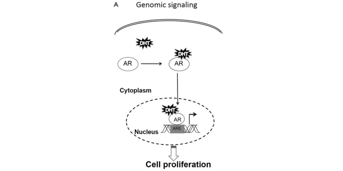 Sinalização do genoma
