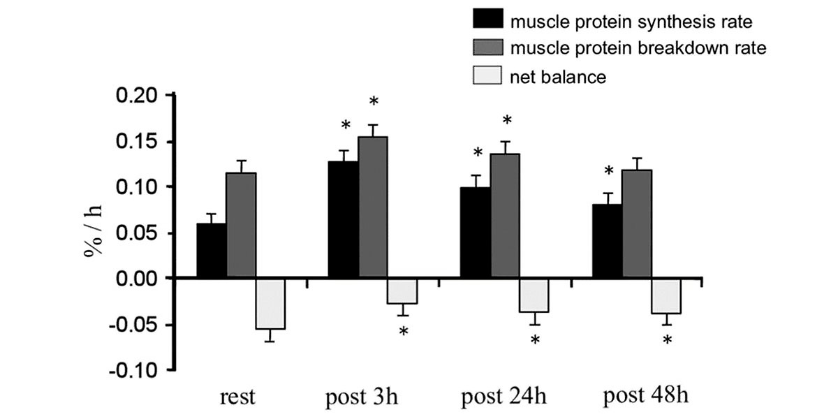 turnover proteico