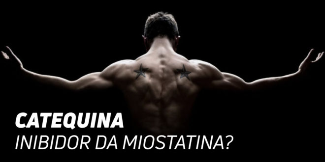 Epicatequina do cacau: inibidor da Miostatina?