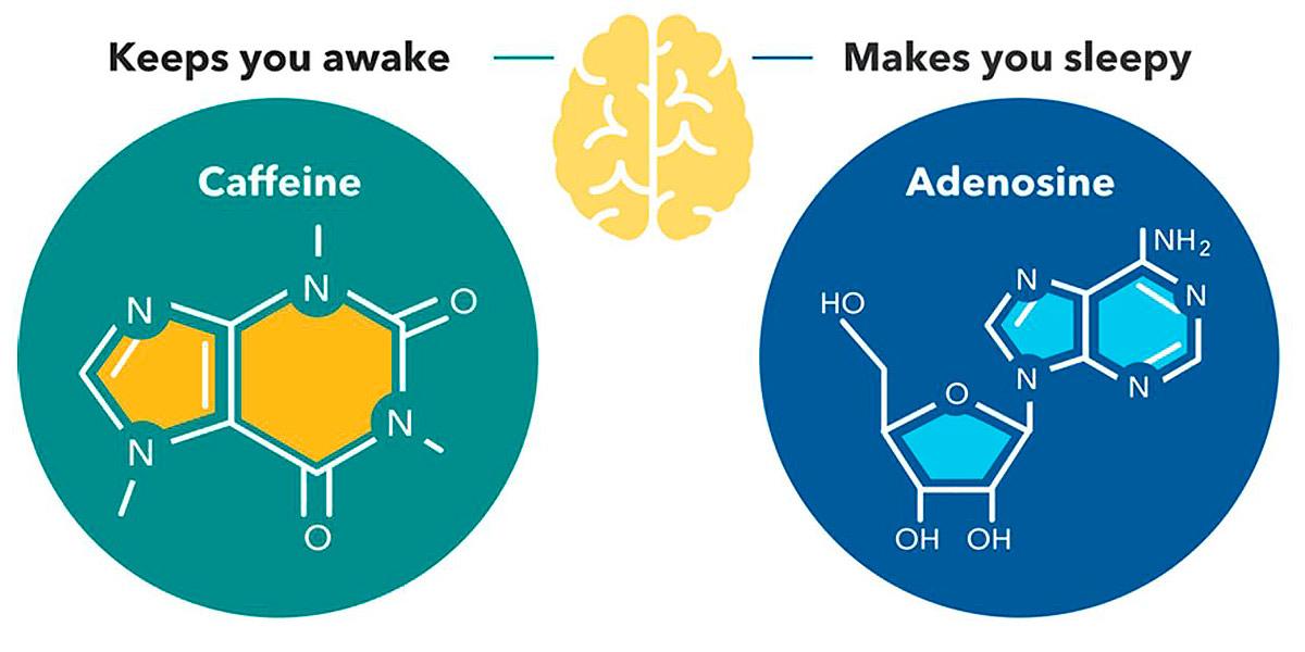 cafeina vs adenosina